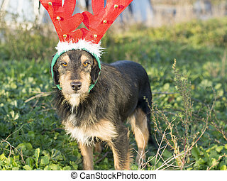 Cute mix breed dog with reindeer horns standing on the grass