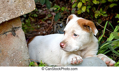 Cute mixed breed pit bull puppy - Mixed breed pitbull puppy ...