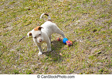 Cute mixed breed pit bull puppy - Playfull mixed breed ...