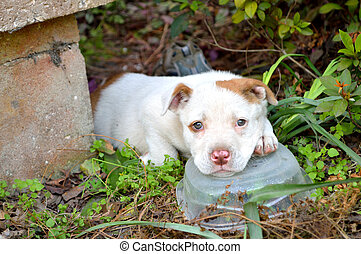 Cute mixed breed pit bull puppy - Pouty and sleepy mixed ...