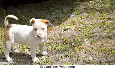 Cute mixed breed pit bull puppy - Spotted miixed breed ...