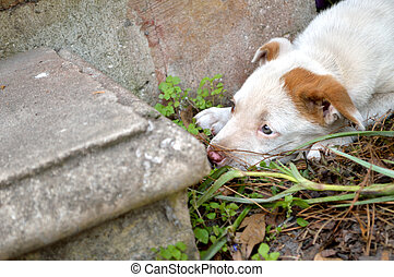 Cute mixed breed pit bull puppy - Spotted mixed breed ...