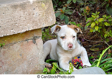 Cute mixed breed pit bull puppy - Spotted, mixed breed, ...