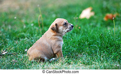 cute mixed breed puppy on a grass