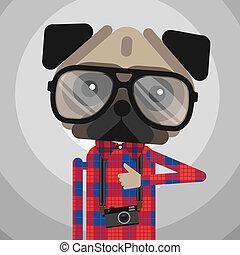 cute, moda, animal estimação, pug caçam, hipster