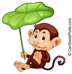 Cute monkey holding leaf on white background