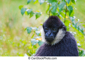 cute monkey looking at the camera