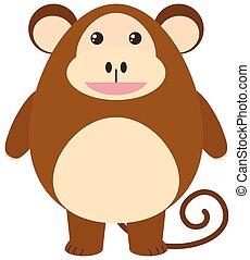 Cute monkey on white background