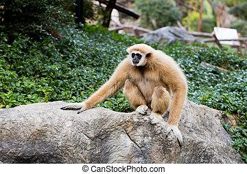 Cute monkey sitting on the stone