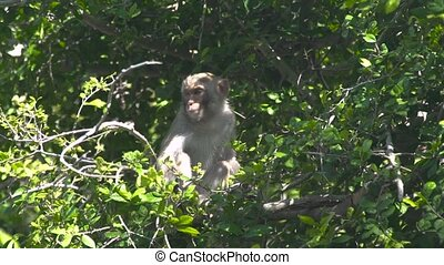 Cute monkey sitting on tree branch in green forest. Close up monkey on branch of tropical tree in rainforest. Wild animal in nature.