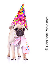 cute mops puppy dog ready for party - cute mops puppy dog ...