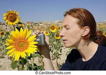 cute, mulher, fotógrafo, em, natureza, campo girassol