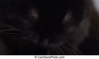 Cute muzzle of a black cat which washes himself close up -...