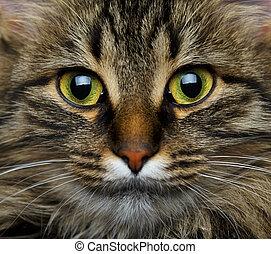 Cute muzzle tabby cat