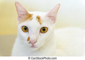 Cute native cat with a blurry background