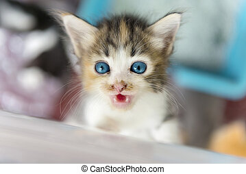 Cute native kitten with a blurry background. Focus on the eye.
