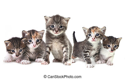 Adorable Cute Kittens on White Background