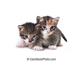 Cute Newborn Baby Kittens Easily Isolated on White -...