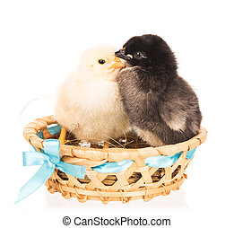 Cute newborn chickens
