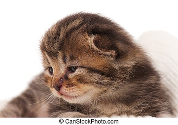 Cute newborn kitten