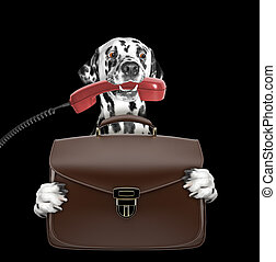 cute office worker businessman dog with suitcase or bag isolated on black