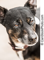 Cute old black dog on a beach in Scotland