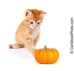 Cute orange kitten playing with a mini pumpkin on white. - ...