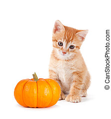 Cute orange kitten with mini pumpkin on white. - Cute orange...
