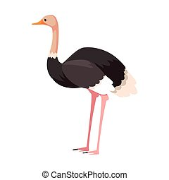 cute ostrich on white background