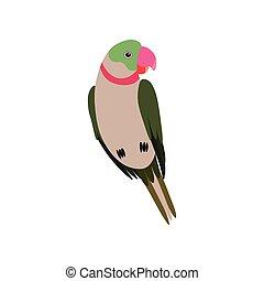 cute, pássaro, passarinho, papagaio, animal estimação, ilustração, vetorial, lar