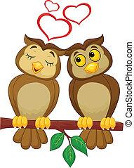cute, par, amor, caricatura, coruja