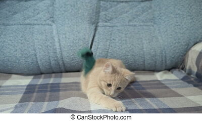 Cute peachy cat playing with toy on sofa.
