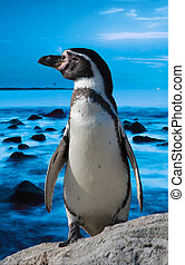 cute penguin with blue ocean background