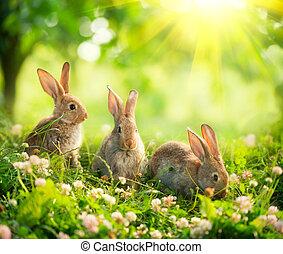 cute, pequeno, coelhinhos, arte, prado, rabbits., desenho, páscoa