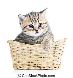 cute, pequeno, gatinho, em, cesta feito vime