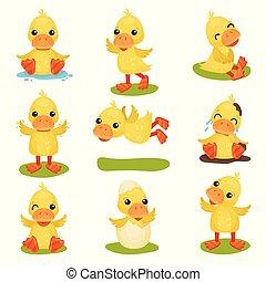 cute, pequeno, jogo, situações, duckling, personagem, diferente, amarela, vetorial, fundo, pato, ilustrações, pintinho, branca, poses