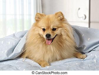 Cute pet at home