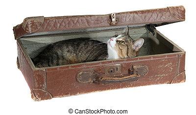 cute pet in old suitcase