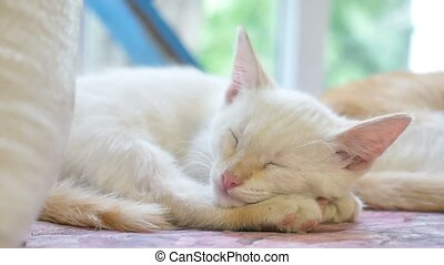 cute pet white kitten sleeping on a table slow motion video