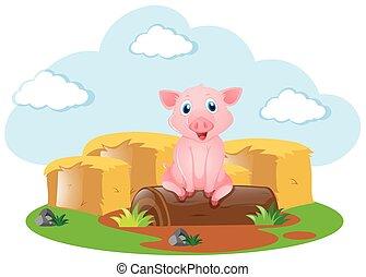 Cute pig on the farm