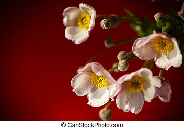 Cute pink flowers on a red background