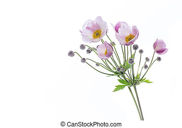 Cute pink flowers on a white background
