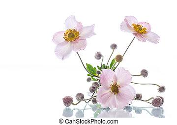 Cute pink flowers