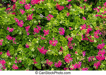 Cute pink flowers surrounded by lush green foliage