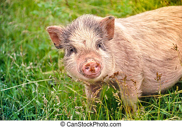 cute pink pig on the green grass
