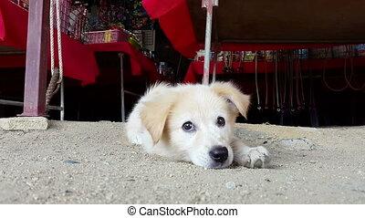 cute playful puppy