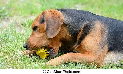 Cute playing dog