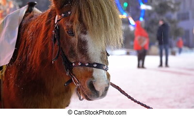 Cute Pony in the Evening on the Street Stands under Falling...