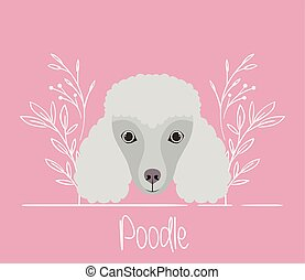 cute poodle dog pet head character