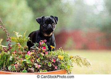 cute portrait of a dog in autumn foliage